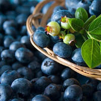 The Nutrients In These Blueberries Can Be Better Absorbed Using PEMF
